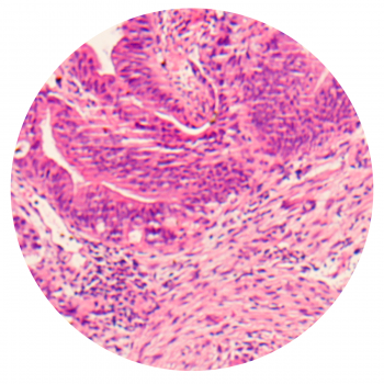 mp-website-image-staining-01